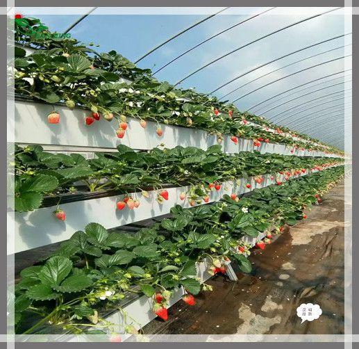 汉明立体种植槽 新式草莓立体种植技术 可增产增收