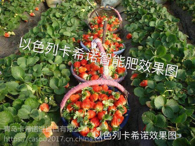 草莓花期、果期管理的误区--卡希诺