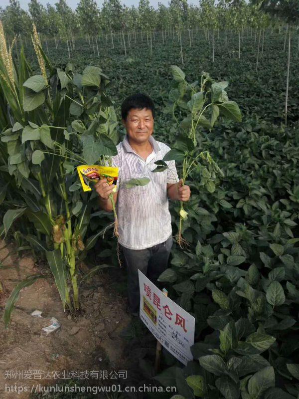 太子参种植用什么肥料好,如何防止太子参死苗烂跟?