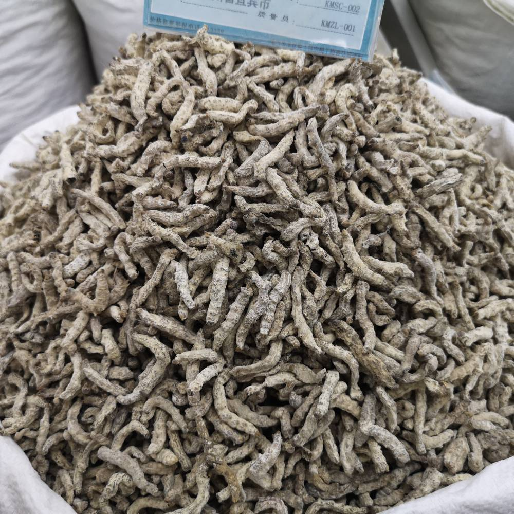 中药白僵蚕功效与作用 白僵蚕产地批发价多少钱一公斤