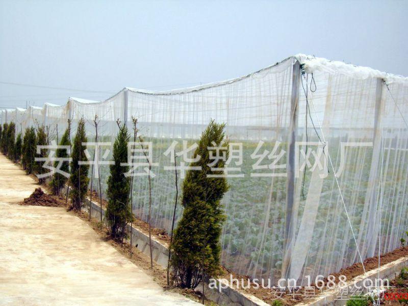 【厂家直销】蝗虫养殖网、塑料防虫网、蔬菜大棚防虫网、防虫网