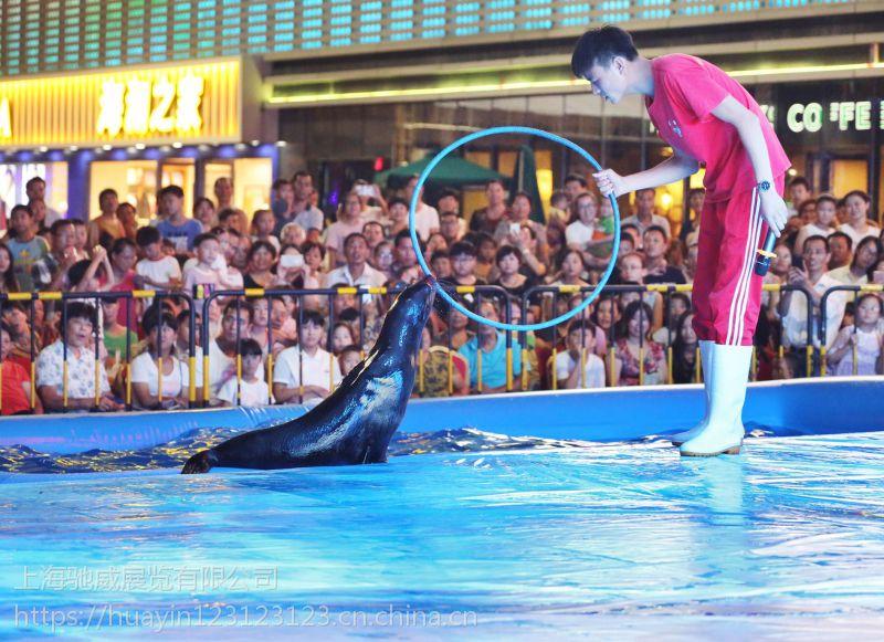 海狮表演海狮租赁 文化演出