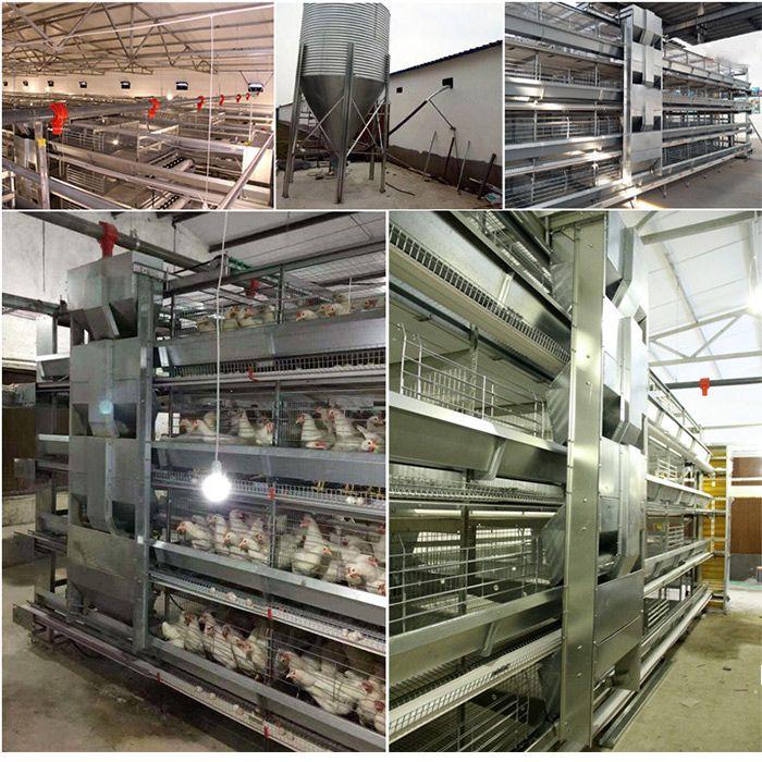 厂家直销蛋鸡清粪机 层叠式肉鸡笼养清粪 自动化养殖设备
