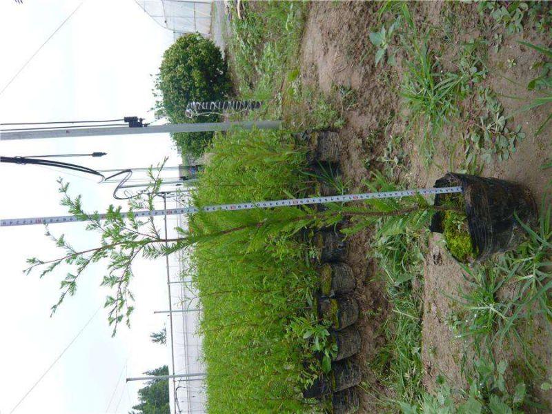 http://himg.china.cn/0/5_742_1092483_800_600.jpg
