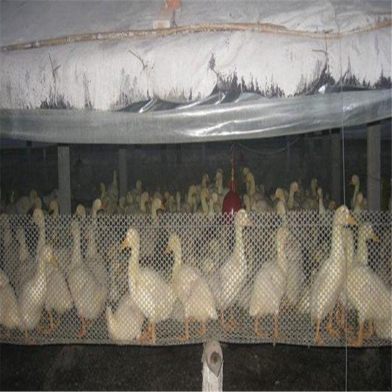塑料底网 养殖白网子 聚乙烯苗床网