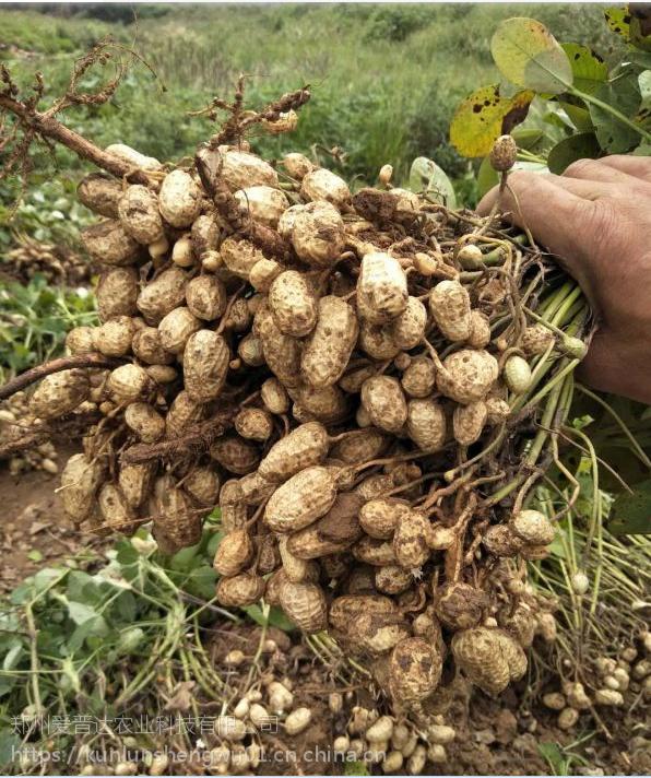花生专用光碳肥 膨果防早衰保花保果