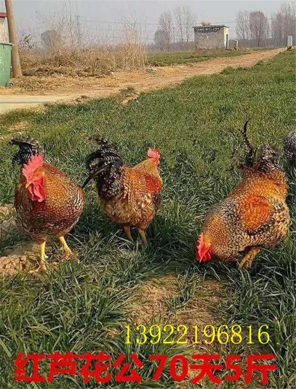 http://himg.china.cn/0/5_778_1094175_609_800.jpg