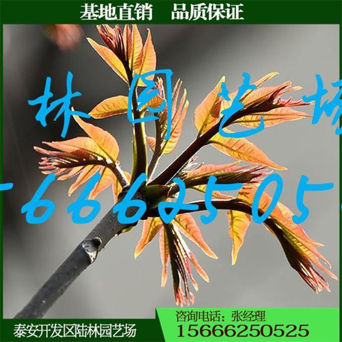 http://himg.china.cn/0/5_784_1034083_679_679.jpg