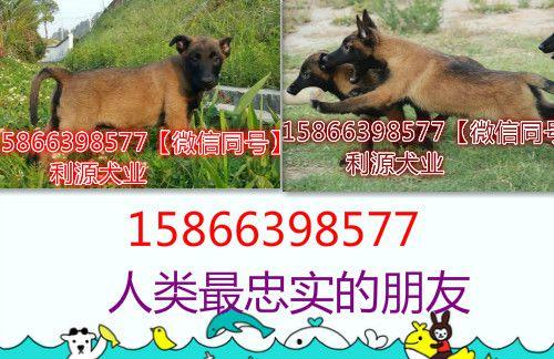 http://himg.china.cn/0/5_788_1117385_500_324.jpg