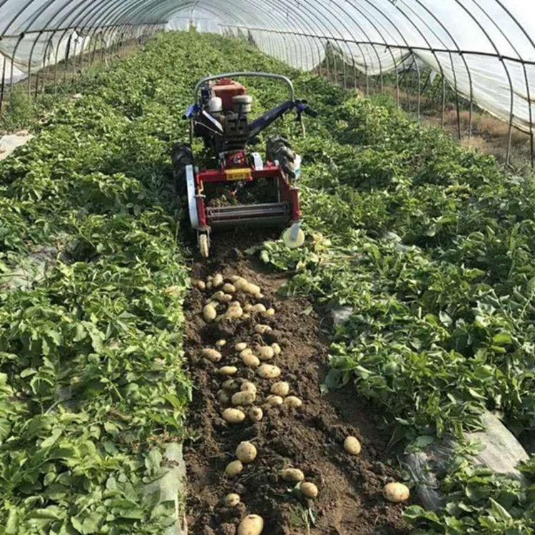 土豆收获机配件甜菜药材厂家直销