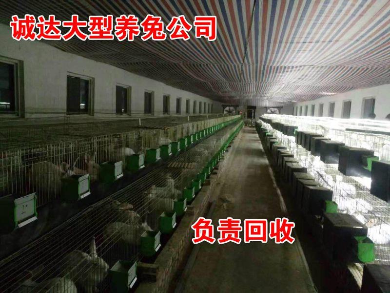 临夏种兔养殖基地