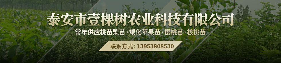 泰安市壹棵树农业科技有限公司