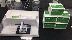 人嗜酸性粒细胞趋化蛋白ELISA试剂盒送货上门