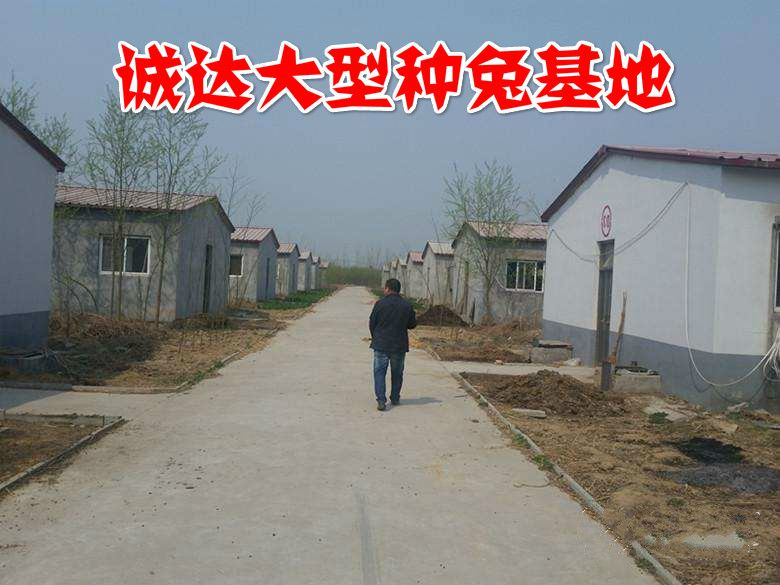 阳江有没有养兔基地