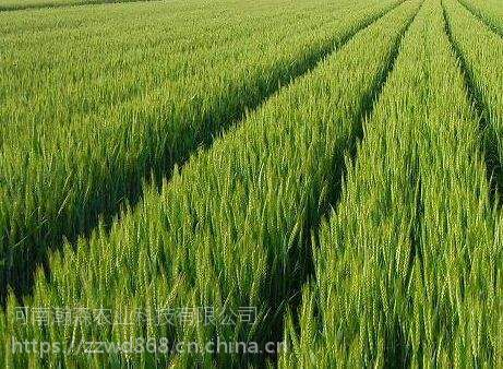 小麦专用增产套餐小麦高产套餐千斤饱小麦套餐