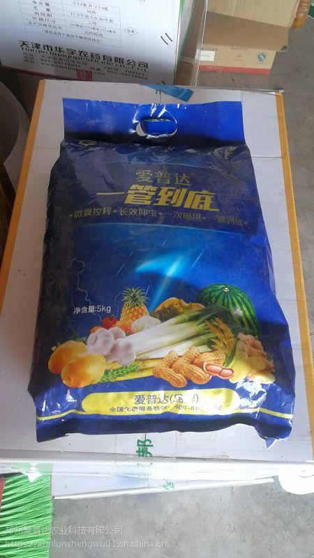 大姜钻心虫药肥管到底, 药效管一季葱蒜姜管到底批发价格