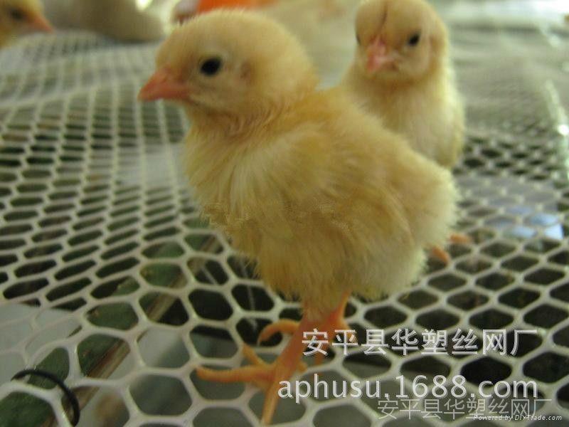 【热销产品】塑料网、养鸭网、养鹅网、塑料养殖网、养鸡网