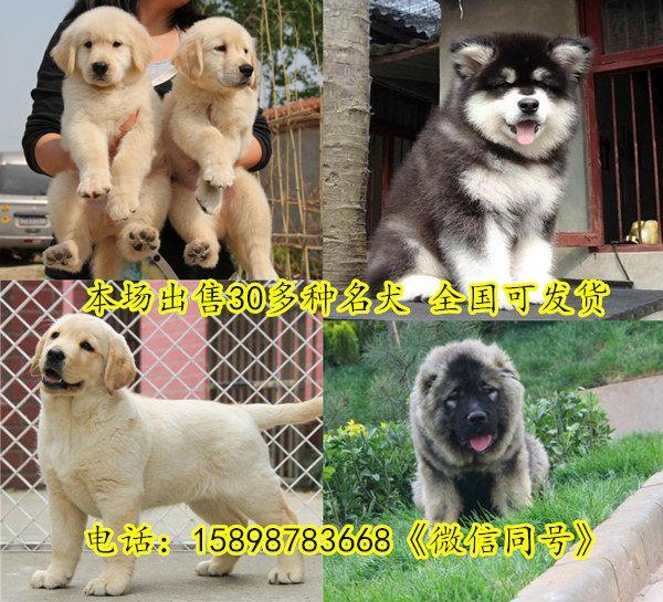 http://himg.china.cn/0/5_921_1277629_600_545.jpg