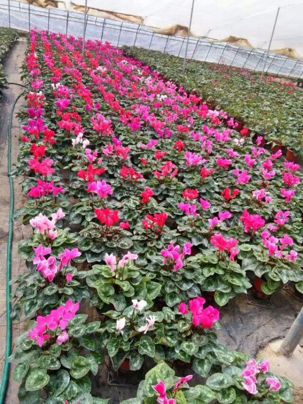 http://himg.china.cn/0/5_926_1003565_601_800.jpg