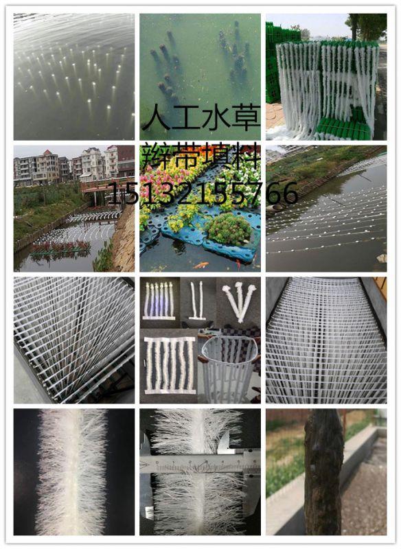 人工水草 生态基 生物绳 现场安装图
