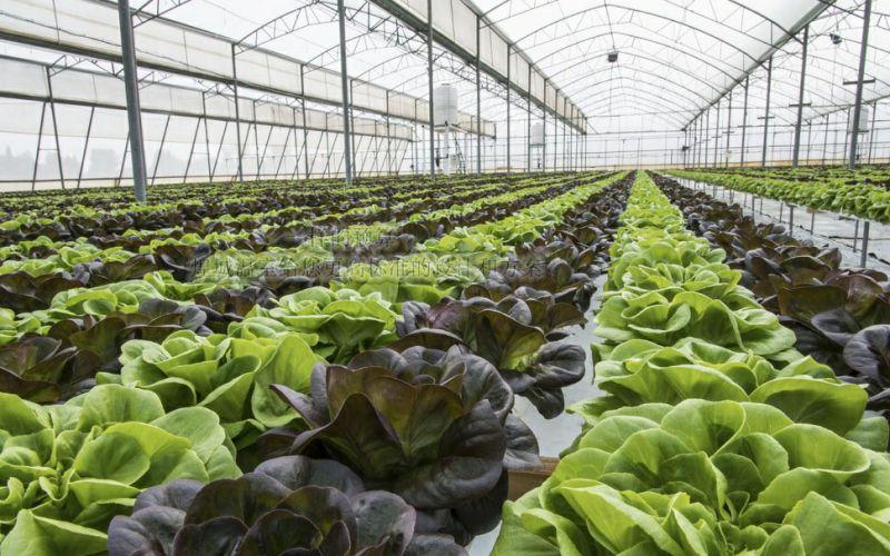 煌城温室南沙水培蔬菜大棚二期落成