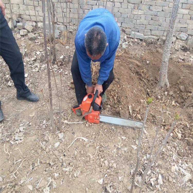 农用两冲程挖树机型号 热销园林土球铲树机 进口发动机挖树机厂家