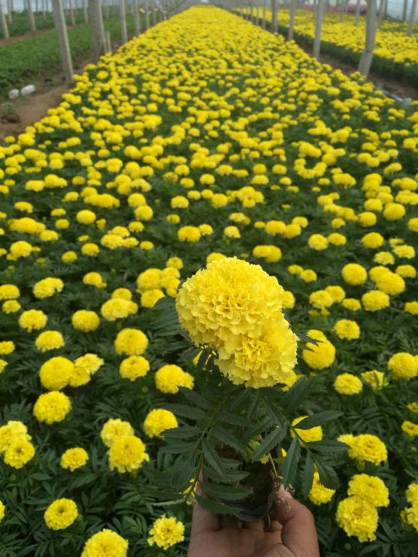 http://himg.china.cn/0/5_977_1003617_600_800.jpg