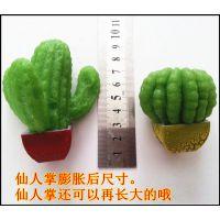 2014地摊热销新产品 膨胀植物仙人掌  会长大的植物 新奇特玩具
