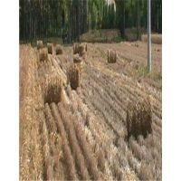 加工低价牧草秸秆打捆机加工市场