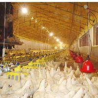 甘肃自动喂料,兰州产床,甘肃畜牧器械设备,甘肃养殖专用空调