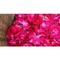 食用玫瑰花瓣新鲜玫瑰花瓣