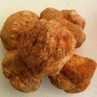 特级干货 猴头菇 东北野生猴头王猴头蘑菇猴头菌500g 批发招代理