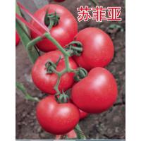 """越冬耐寒西红柿种子-""""苏菲亚"""""""