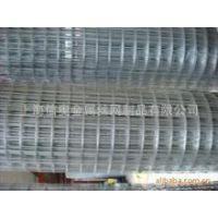 上海专业供应 粗丝电焊网 热镀锌电焊网