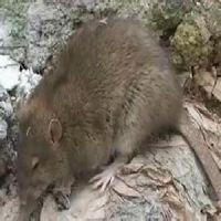 供应集美专业除虫灭鼠服务/集美专业除虫灭鼠公司/专业除虫灭鼠公司