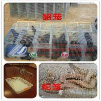 不生锈-镀锌铁丝网-圈地养殖网-防鼠网-养鸡养鸭