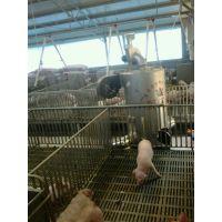 猪舍保育室加温设备高效节能绿色环保