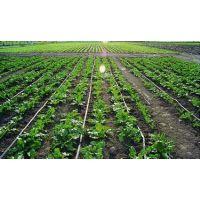 供应滴灌带;长春滴灌带生产厂家;滴灌带质量好的生产厂家;