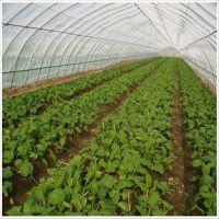 温室专用便宜高质量防鸟网 大棚防虫网 蔬菜防虫网 果园防虫网