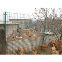 饶阳蔬菜大棚养殖铁丝网/家禽养殖荷兰网