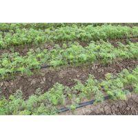 河南大棚滴灌系统|滴灌带|PE管|厂家免费指导安装