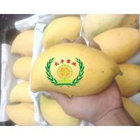 缅甸鹰嘴芒果
