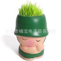 -DIY办公室迷你盆景植物 绿色精品栽培 多系列