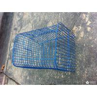 动物饲养笼 鸟笼29041 宠物笼教学仪器 菏泽三和科教批发