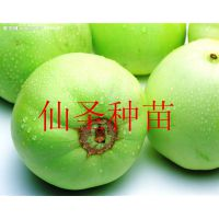 供应批发日本进口基地种植用甜瓜种子 日本甜宝甜瓜种子