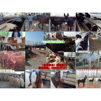 仪陇县波尔山羊、养牛场的建设