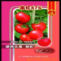供应蔬菜种子批发西红柿种子又称番茄种子 发芽率高