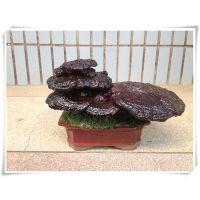 贺年大礼灵芝盆景桌面盆栽创意小礼品花卉多肉植物批发盆景送客户