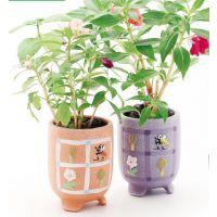 新秘密小花园 zakka植物 diy种植栽培 创意办公礼品 多肉植物盆栽
