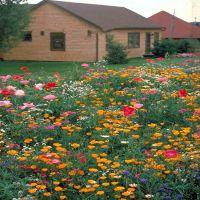 进口野花组合花卉种子 工程草花组合种子 格桑花种子 多头矮杆
